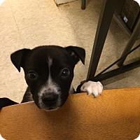 Adopt A Pet :: Logan - Fair Oaks Ranch, TX