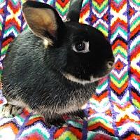 Adopt A Pet :: Casanova - Erie, PA