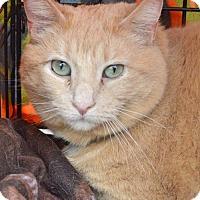 Adopt A Pet :: Ginger - Livonia, MI