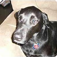 Adopt A Pet :: Merlin - Rigaud, QC