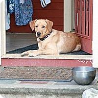 Adopt A Pet :: Quinn - Fort Hunter, NY