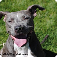 Adopt A Pet :: Bluebelle - Los Angeles, CA