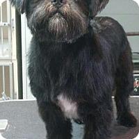 Adopt A Pet :: HAN SOLO - Boca Raton, FL