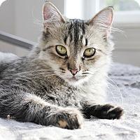 Adopt A Pet :: Misato - Chicago, IL