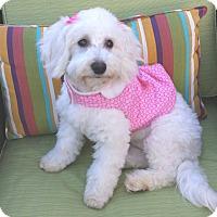 Adopt A Pet :: Cricket - Encino, CA