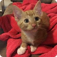 Adopt A Pet :: Finn - San Angelo, TX