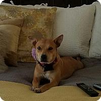 Adopt A Pet :: June - Russellville, KY
