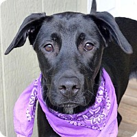 Adopt A Pet :: Dixie - Baton Rouge, LA