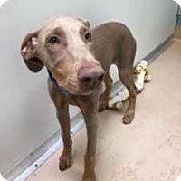 Adopt A Pet :: Eleanor - Tracy, CA