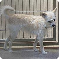 Adopt A Pet :: Blondie - Tracy, CA