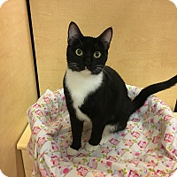 Adopt A Pet :: Molly - Foothill Ranch, CA