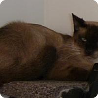 Adopt A Pet :: Bing - Hamburg, NY