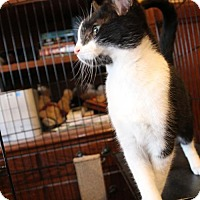Adopt A Pet :: Chili - South Saint Paul, MN