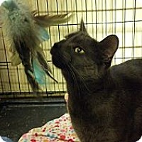 Adopt A Pet :: Skylar - Pittstown, NJ