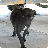 Adopt A Pet :: Riley - Hendersonville, TN
