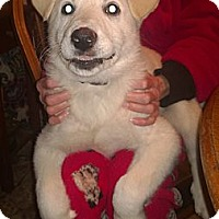 Adopt A Pet :: Irish - Danbury, CT