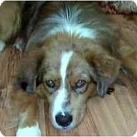 Adopt A Pet :: Buddy Boy - Orlando, FL