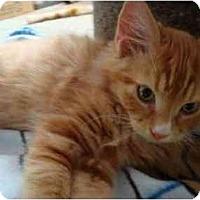 Adopt A Pet :: Quatchi - Davis, CA