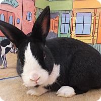 Adopt A Pet :: Robert - Foster, RI