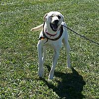 Adopt A Pet :: DAPHNE - Cameron, MO
