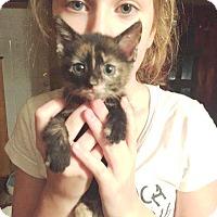 Adopt A Pet :: Talloula - Putnam, CT
