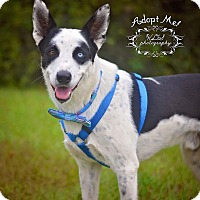 Adopt A Pet :: Felix - Fort Valley, GA