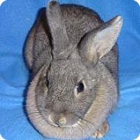 Adopt A Pet :: Jezebel - Woburn, MA