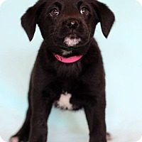 Adopt A Pet :: Carol - Waldorf, MD