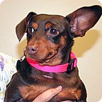 Dachshund Mix Dog for adoption in Wildomar, California - Rosa