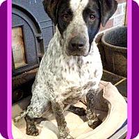 Adopt A Pet :: RODEO-Princess - Middletown, CT