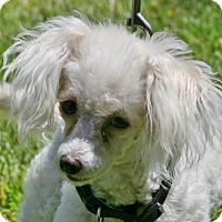 Adopt A Pet :: Elliott - Carlsbad, CA
