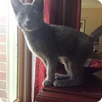 Adopt A Pet :: Jasper - Troy, OH