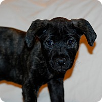 Adopt A Pet :: Angelo - Randolph, NJ