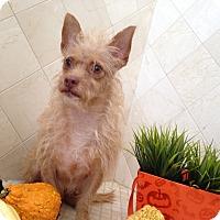 Adopt A Pet :: Doc Holliday - Scottsdale, AZ