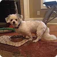 Adopt A Pet :: Baxter - Marietta, GA