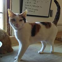 Adopt A Pet :: FIONA - Owenboro, KY