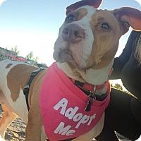 Adopt A Pet :: Maya - Framingham, MA