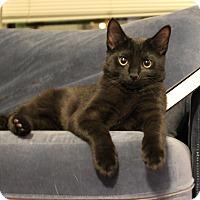 Adopt A Pet :: Jeremiah - Carlisle, PA
