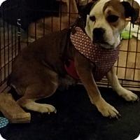 Adopt A Pet :: Adel - DAYTON, OH