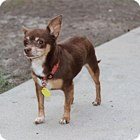 Adopt A Pet :: Ted - Weeki Wachee, FL
