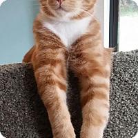Adopt A Pet :: Lee - West Palm Beach, FL