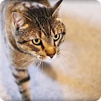 Adopt A Pet :: Louie - Lincoln, NE