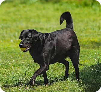 Labrador Retriever Mix Dog for adoption in Huntsville, Alabama - Stella