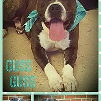 Adopt A Pet :: GUSSGUSS - Hopewell, VA
