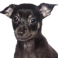 Adopt A Pet :: Paul - Fort Lauderdale, FL