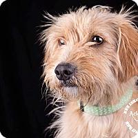 Adopt A Pet :: Baxter - Lodi, CA