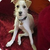 Adopt A Pet :: Meadow - Oakland, CA