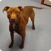 Adopt A Pet :: Lloyd - Gainesville, FL