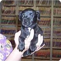Adopt A Pet :: Paris - Groveland, FL