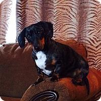 Adopt A Pet :: Bentley - Louisville, CO